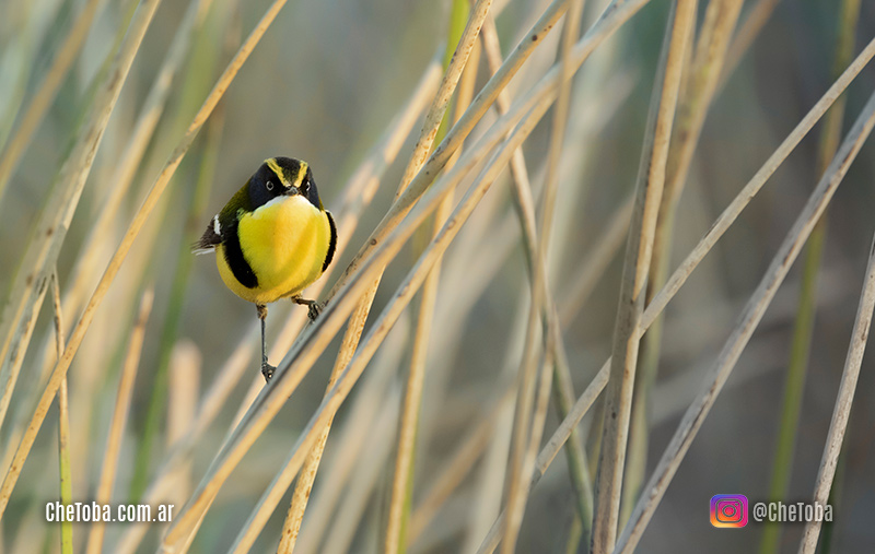 safaris fotográficos de aves en Córdoba