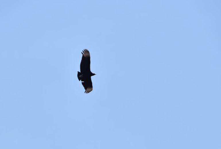 Aves rapaces embalse Rio III