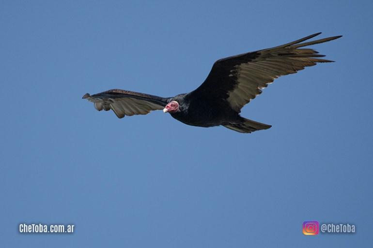 Viajando sin salir de casa - #BirdWatching II