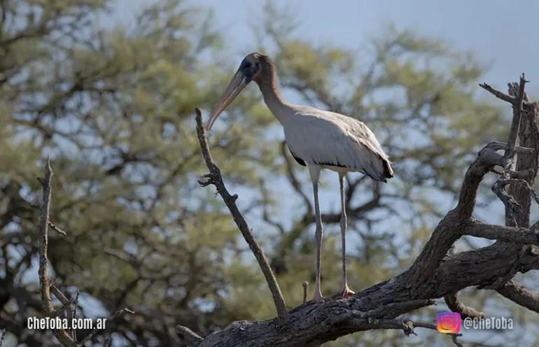 9 Especies de Aves del Litoral aparecieron en el Centro de Córdoba