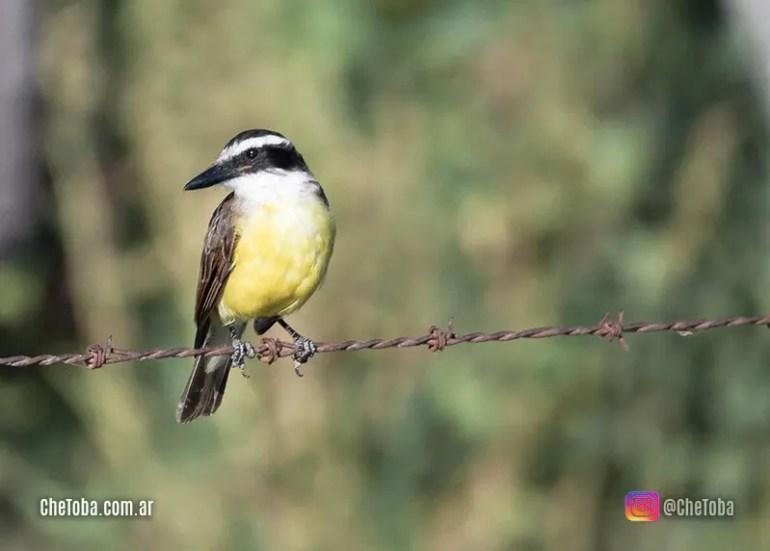 10 aves más fáciles de ver en Argentina