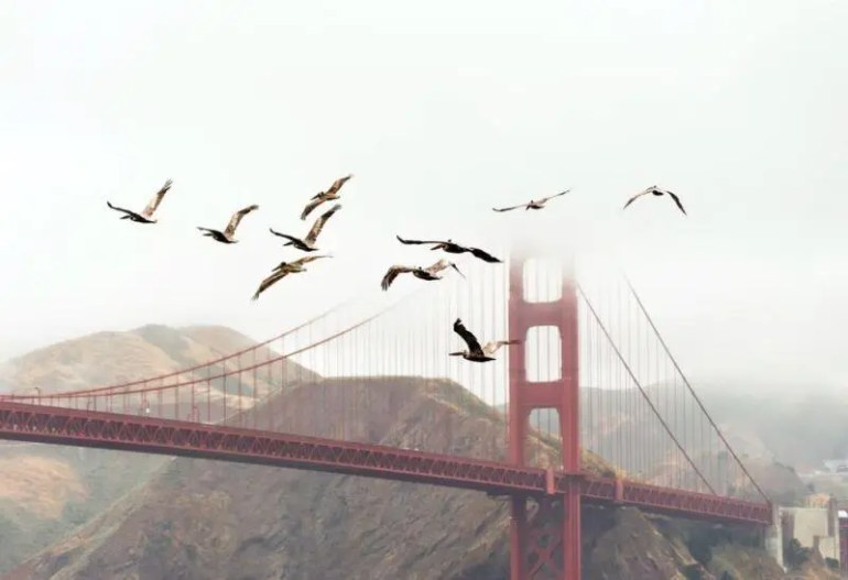 Aves en San Francisco, California