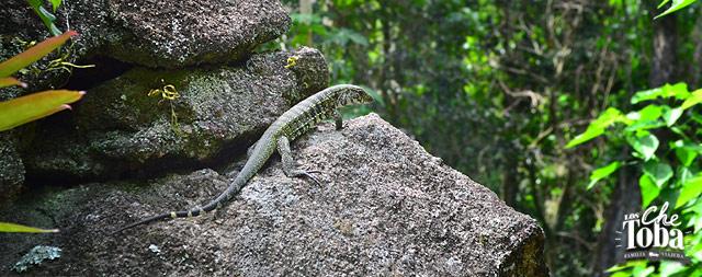 fauna-ilhagrande-brasil