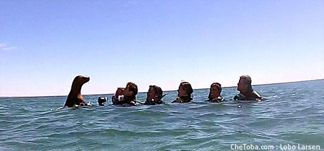 Snorkel Lobos Marinos Patagonia