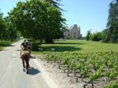 Grands Vins de Bordeaux