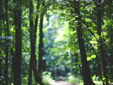 forest-path-trees-6037