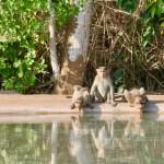 Tabilista南インド世界遺産の街ハンピの旅2