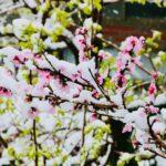 20200329 CONFINEMENT DAY2: Sudden Snow