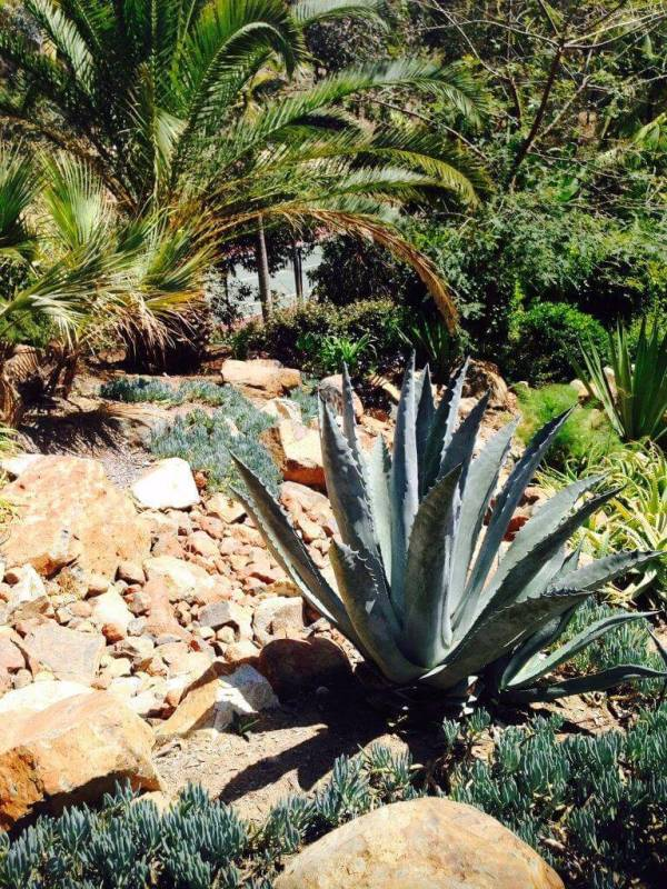 rancho santa fe landscape