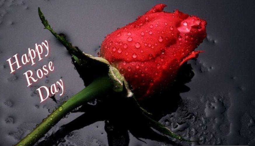 Happy-rose-day-pics