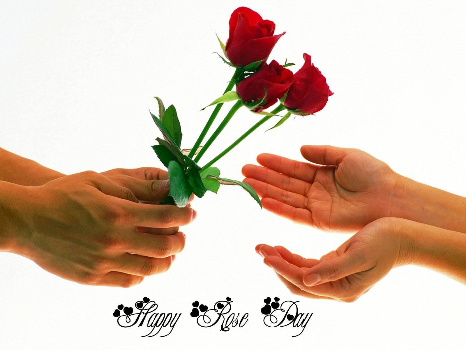 Highly Romantic Rose Day SMS, Wishes For Girlfriend/Wife