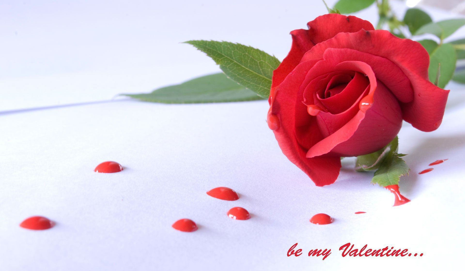 happy-rose-day-love-you-hd-image (1)
