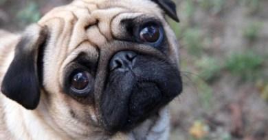 cane cucciolo bisognini
