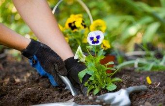 Giardinaggio, hobby e relax