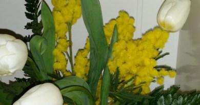Mimose per la festa della donna