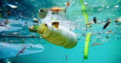 Plastica: piatti e bicchieri inquinano i mari e gli oceani