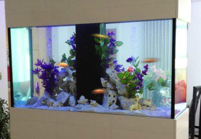 Perché avere un acquario in casa: dieci buoni motivi