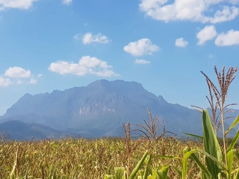Mountain with corn