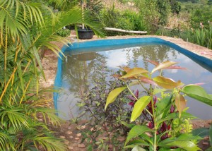 Organic Pool, Spicy Villa eco-lodge, Chiang Mai, Thailand