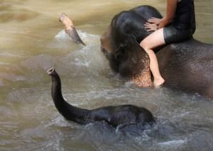 Elephant Experience, Spicy Villa eco-lodges, Chiang Mai, Thailand
