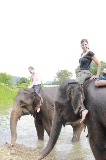Bringing elephants for a bath