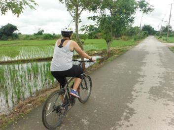 Cycling by the rice fields