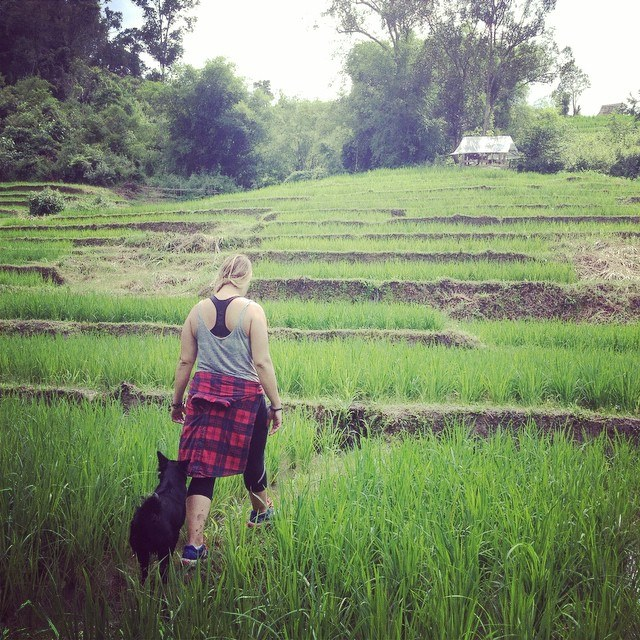 Hiking in green rice fields