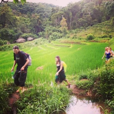 Trekking over green paddies