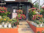 pet kamthieng flower