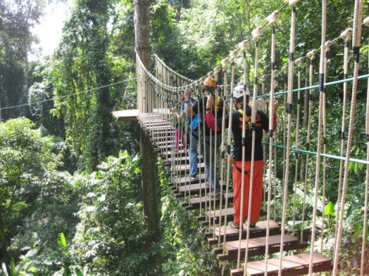 Image result for FLYING Squirrels Chiang Mai