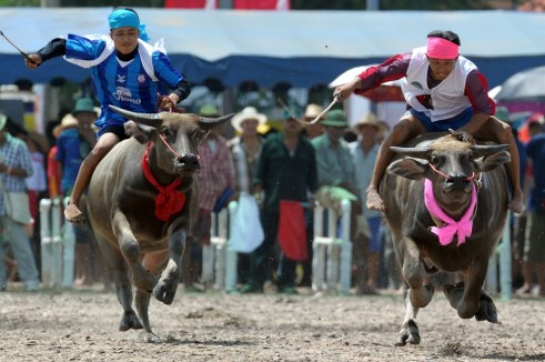 Water Buffalo Festival in Thailand
