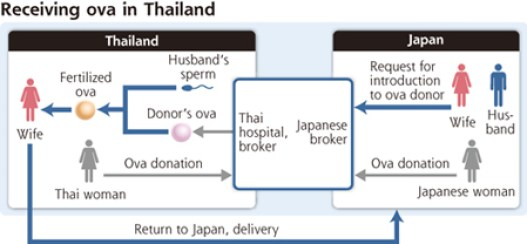 Many Japanese Coming to Thailand for Ova Donations
