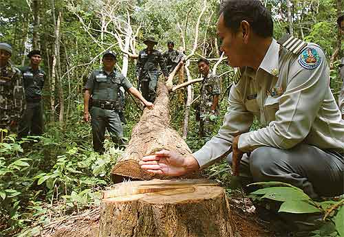 Last year, it was estimated around 140 tonnes of the wood, worth more than 20 billion baht, was illegally fallen
