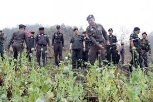 A team of police destroy a poppy field in Ta Song Yang district of Tak province