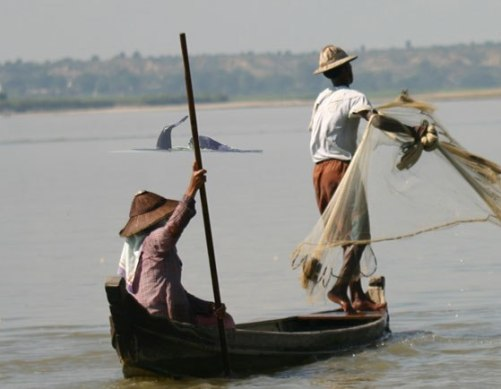The Mekong is the natural habitat of the endangered Irrawaddy dolphin