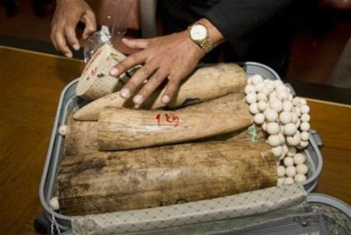 a Cambodian man who was trying to smuggle 7 elephant tusks and other ivory-made accessories, worth around 2 million baht altogether, through the airport