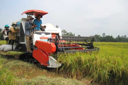 A local rice seller revealed that declining prices for rice paddy has resulted in retailers marking down their prices for milled rice.