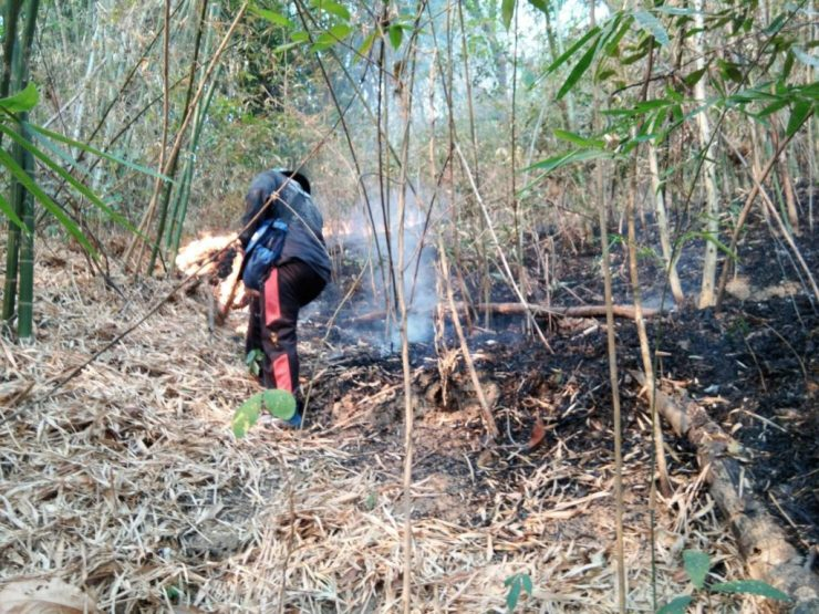 Firefighters Struggle to Contain Forest Fire in Chiang Rai's Mae Chan District