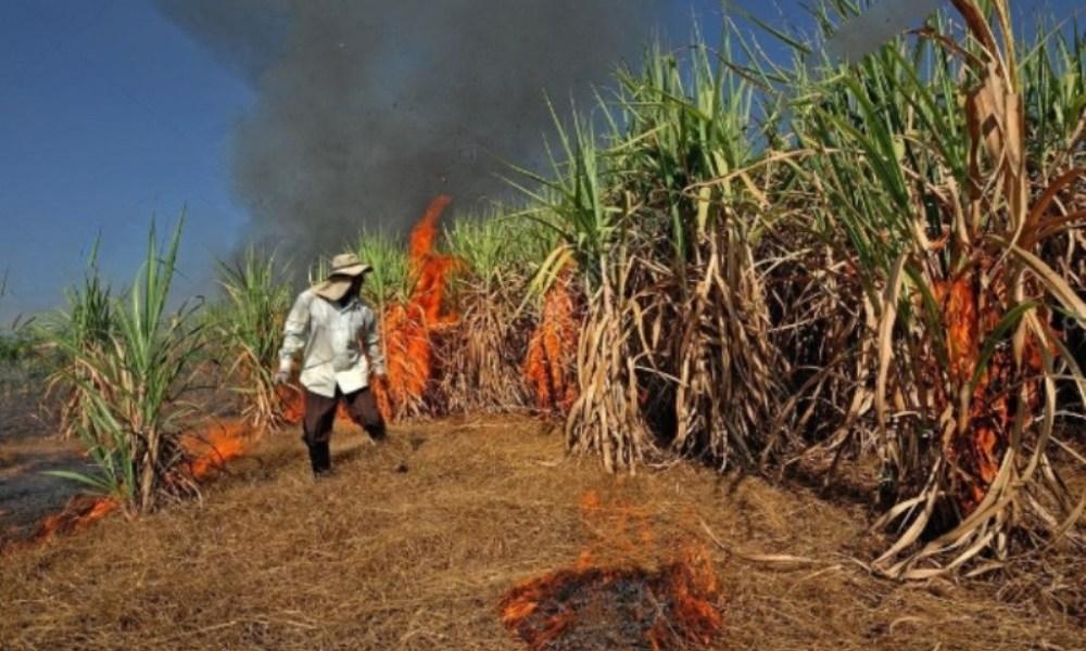 Sugarcane Burning in Eastern Thailand Worsens Air Quality