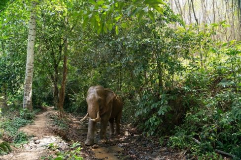 koh Lanta Elephants
