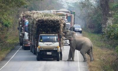 Thailand's Sugar Cane Farmers