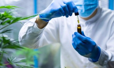 Big Pharma,cannabidiol CBD Research,marijuana