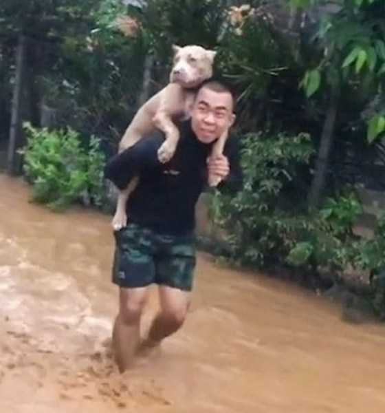 Chiang Rai, Thailand, Flooding, Floods