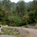 Camino a Tapalapa. Foto: Fermín Ledesma/Chiapas PARALELO