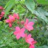 Flores de casa. HCM.