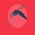 Dengue Foto: Secretaria de Salud