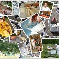 Bee IPm field work collage