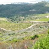 Les vignes au pied du mont