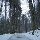 La route de Vizzavona.