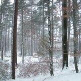 La forêt de Vizzavona.